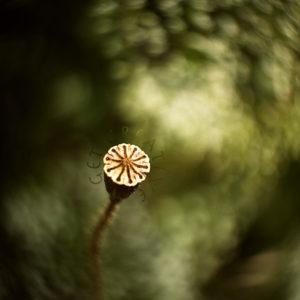 Photography / Melanie Herzog